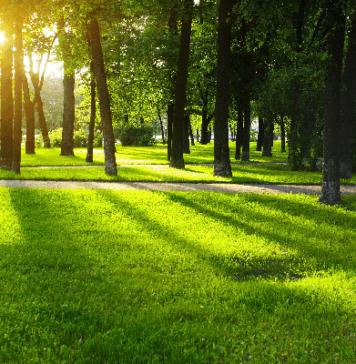 Деревья, Сады